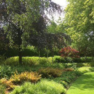 Acres Wild Surrey Serene Grasses and Ferns