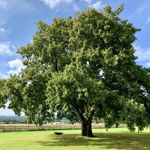 Acres Wild Surrey Serene Large Tree
