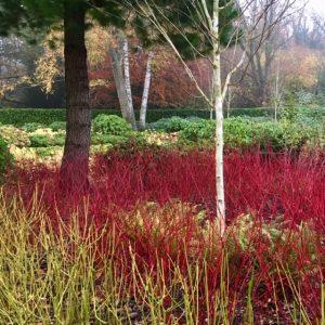 Acres Wild Surrey Serene Mixed Dogwood Planting
