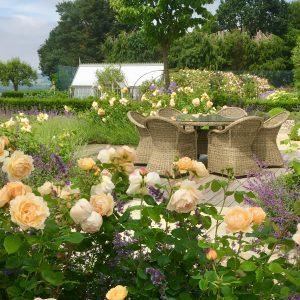 Acres Wild Surrey Serene Peach Colour Roses