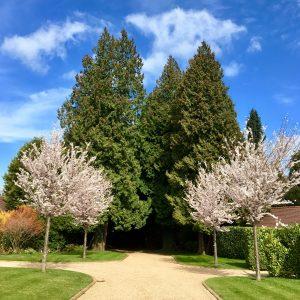 Acres Wild Surrey Serene Spring Flowering Trees