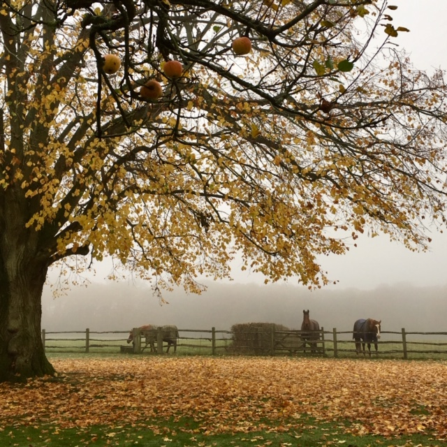 Acres Wild Surrey Serene Tree in Autumn