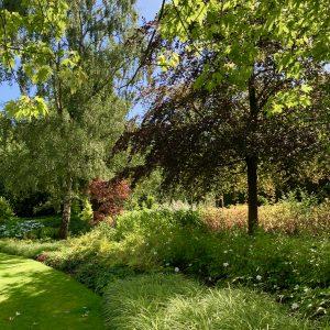 Acres Wild Surrey Serene Tree Planting