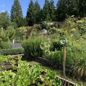 Acres Wild Surrey Serene Vegetable Garden