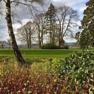 Acres Wild Surrey Serene View to Tree House