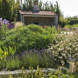 Acres Wild Guernsey Garden Lavender Planting