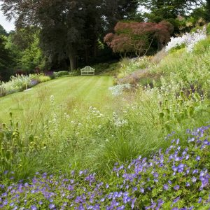 Acres Wild Steeply Sloping Planting