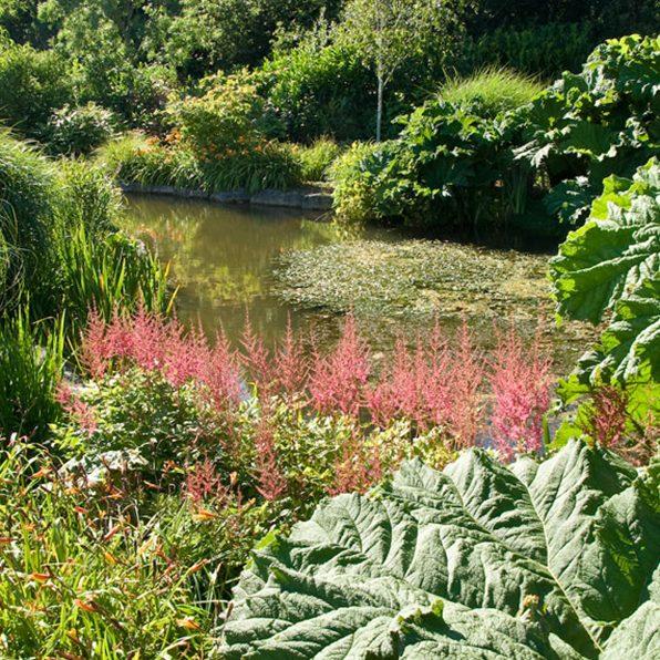 Acres Wild Ways with Water Gunnera