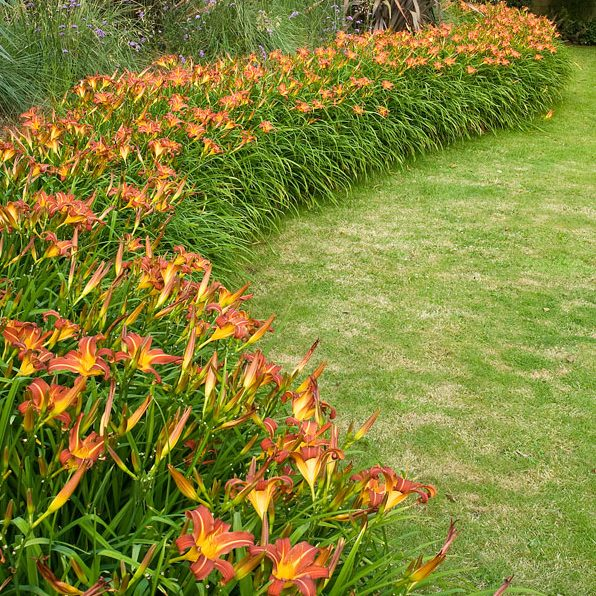 Acres Wild Form and Foliage Masses of Lilies