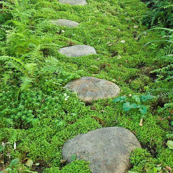 Acres Wild Form and Foliage Stones in moss