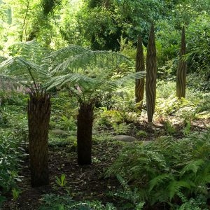Acres Wild Tree Form and Foliage Ferns and Sculpture